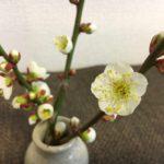 梅の花が咲きました!【農家のレシピ帳】