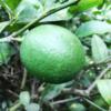 緑色の実。これは何でしょう?/畑から今日の一枚。【農家のレシピ帳】