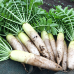 大根の収穫。/畑から今日の一枚。【農家のレシピ帳】