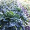 畑は冬景色。/畑から今日の一枚。【農家のレシピ帳】