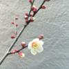 春の訪れ。/畑から今日の一枚。【農家のレシピ帳】